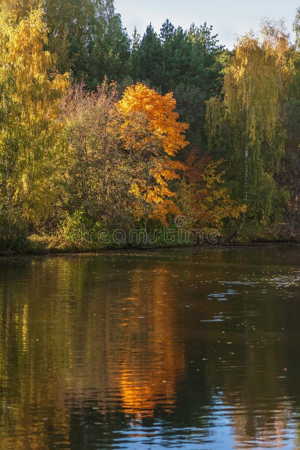 Autumn landscape, colorful vivid foliage of trees, sunny day. Reflection of bright forest in water stock images