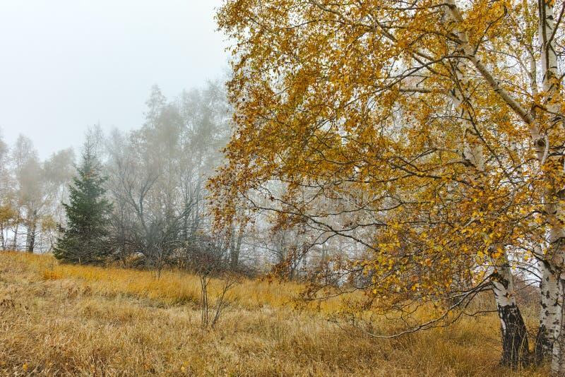 Autumn Landscape com árvores e névoa amarelas, montanha de Vitosha, Bulgária fotografia de stock