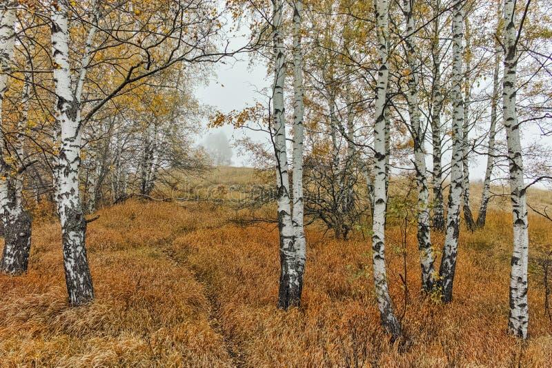 Autumn Landscape com árvores e névoa amarelas, montanha de Vitosha, Bulgária imagens de stock