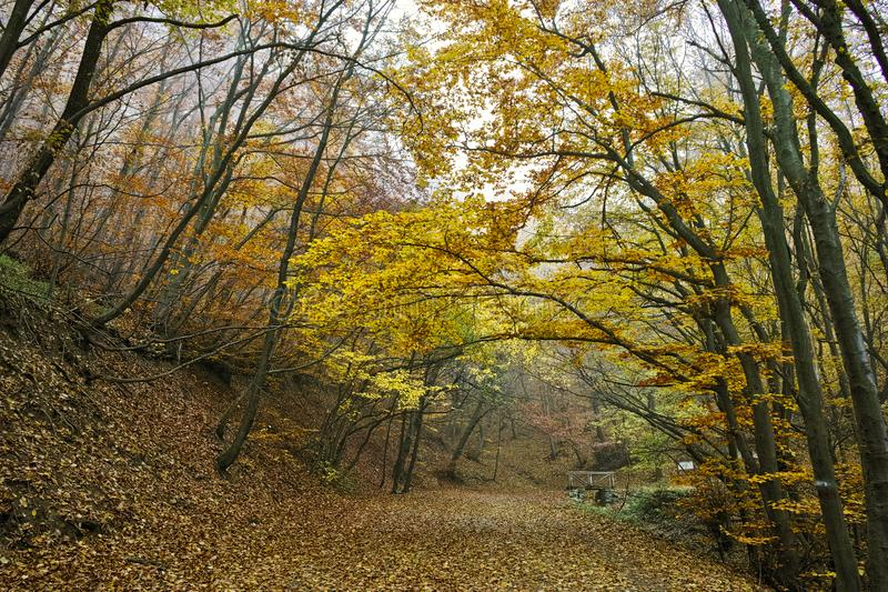 Autumn Landscape com árvores e névoa amarelas, montanha de Vitosha, Bulgária fotos de stock