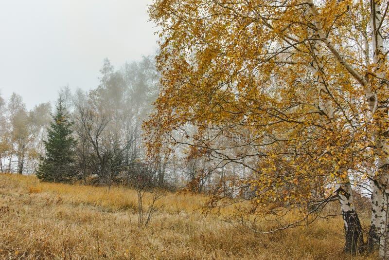 Autumn Landscape con los árboles amarillos, montaña de Vitosha, Bulgaria fotos de archivo libres de regalías