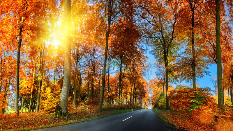Autumn landscape with country road in orange tone. Nature background stock photography