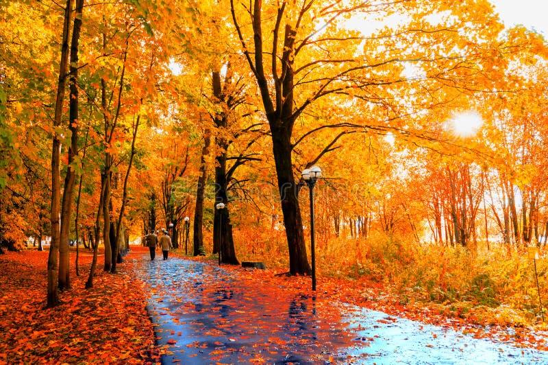 Autumn Landscape De herfstbomen en de herfstbladeren op de natte asfaltweg in de steeg van het de herfstpark na regen royalty-vrije stock foto