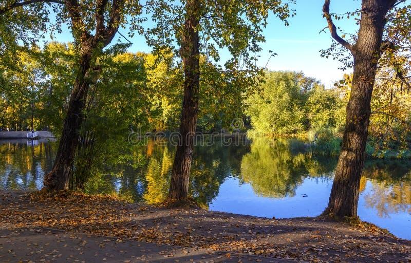 Autumn Landscape De herfstbomen op de kust van de vijver in park bij de zonsondergang stock fotografie