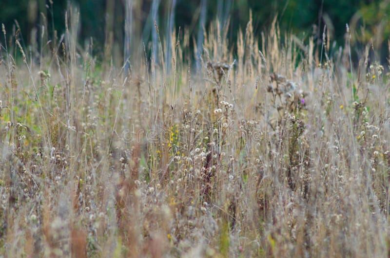 Autumn Landscape Een gebied van tarwe en bloemen royalty-vrije stock foto's