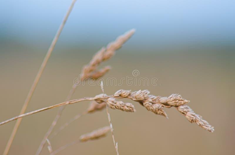 Autumn Landscape Een gebied van tarwe en bloemen royalty-vrije stock afbeelding