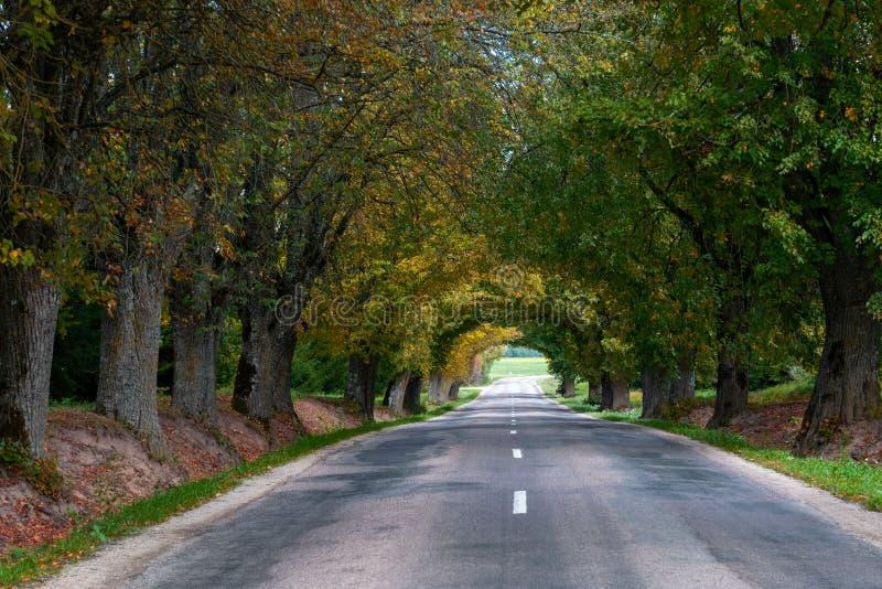 Autumn Landscape Eenzame landelijke weg met vergankelijke stegen stock foto's