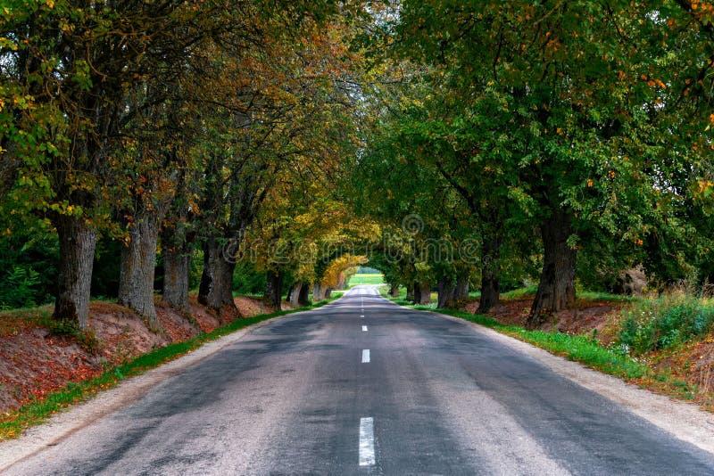 Autumn Landscape Eenzame landelijke weg met vergankelijke stegen royalty-vrije stock afbeeldingen