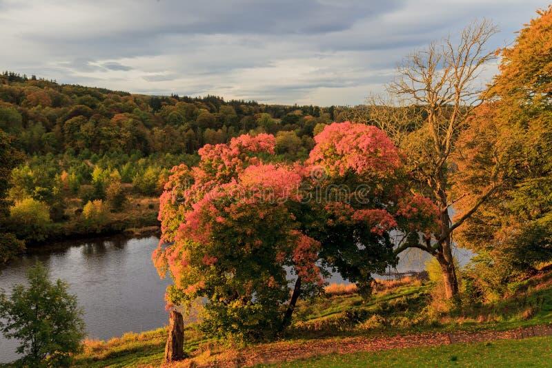 Autumn Landscape en Rivier Dee in Aberdeen stock foto
