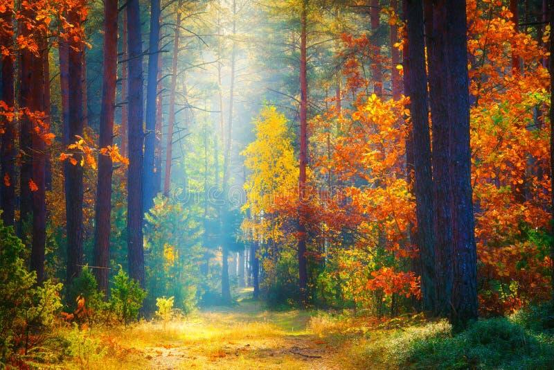 Autumn Landscape Fallhintergrund Waldsonnenlicht stockfotografie