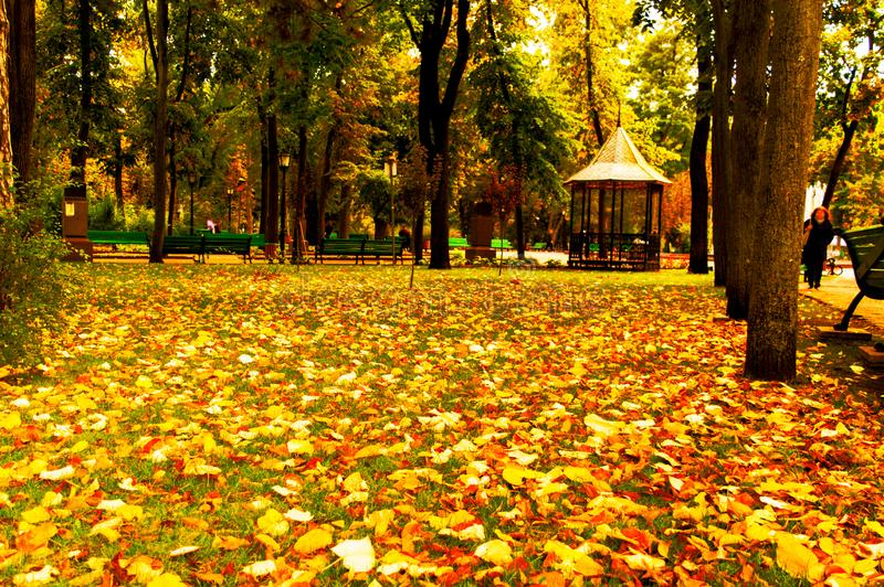 Autumn landscape with falling leaves in an old park.  royalty free stock image