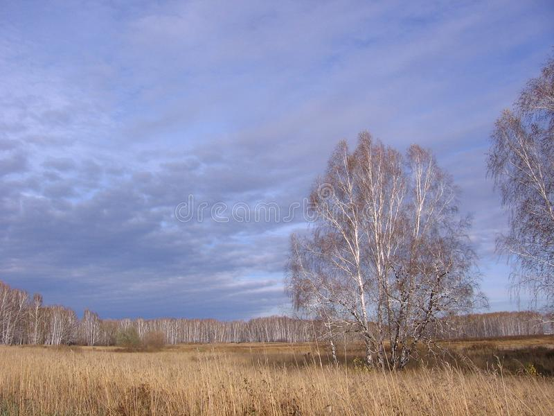 Autumn landscape field with dried grass and trees illuminated by the sun on the background of clouds Siberian nature stock image