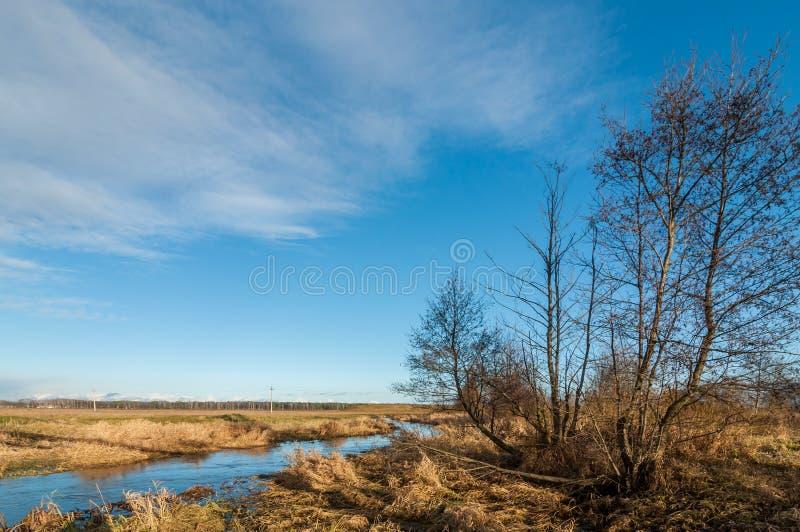 Autumn Landscape fiume paludoso stretto con gli alberi nella priorità alta fotografie stock