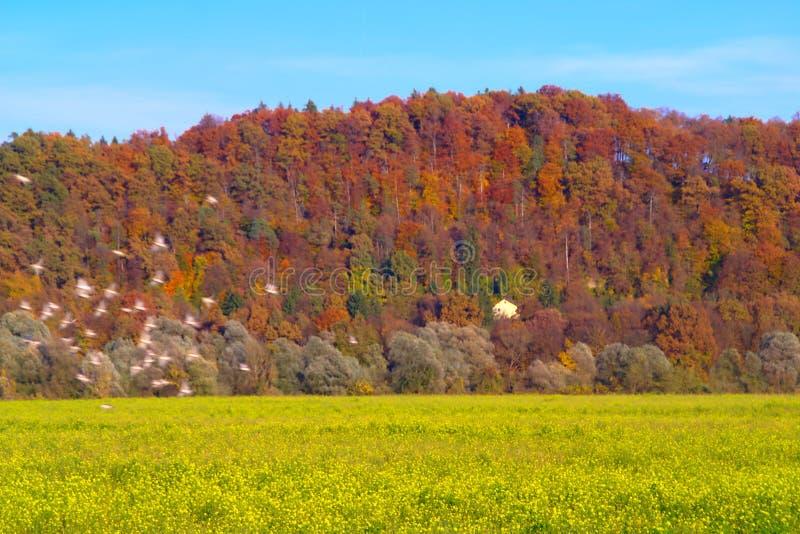 Autumn Landscape With Flock Of fåglar arkivfoton