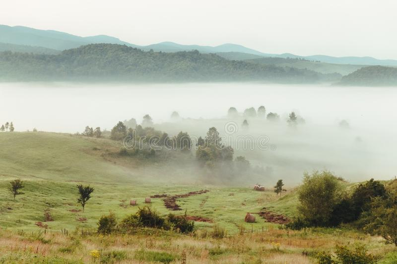 Autumn landscape with fog and colorful trees. In european countryside stock photos