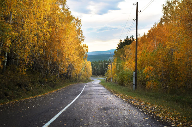 Autumn Landscape With Forest royalty free stock photos