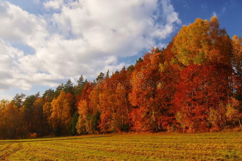 Autumn landscape with forest and blue sky royalty free stock photos
