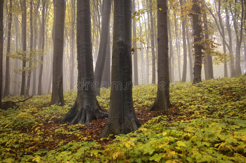 Autumn landscape from a forest with yellow leafs stock photo