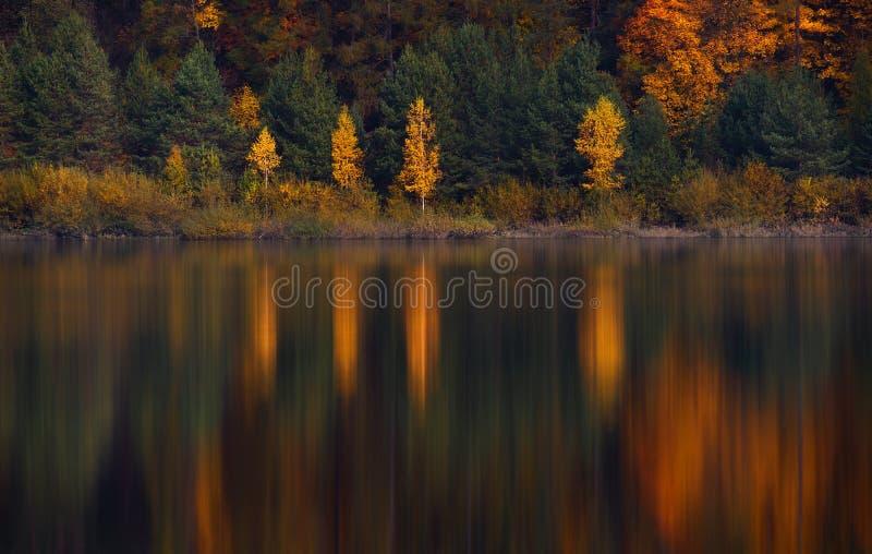 Autumn Landscape With Four Birches med gul lövverk och deras härliga kulöra reflexion i lugna vattnet av en lilla Mounta royaltyfria bilder