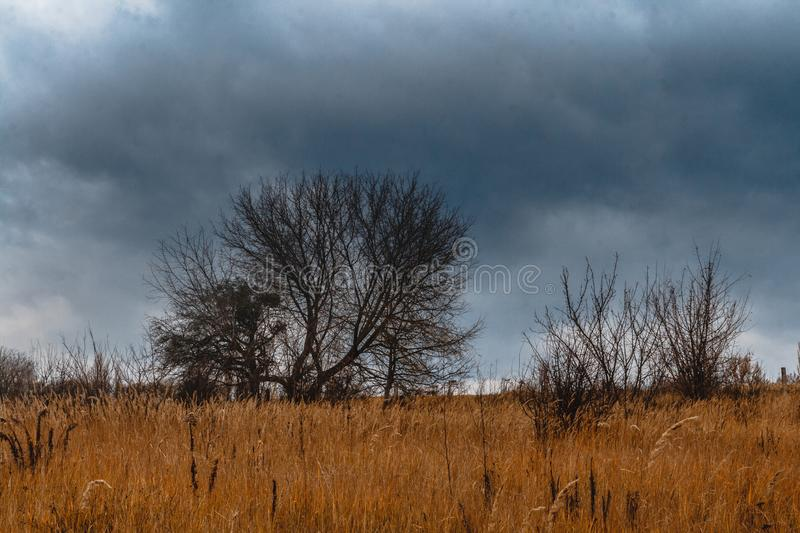Autumn landscape. Gloomy severe sky, lonely bare trees in a yellow field stock images