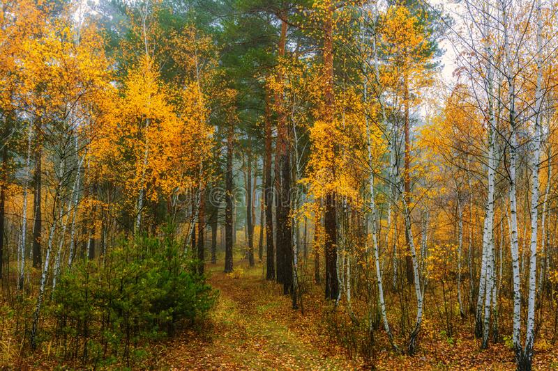Autumn landscape. A good day for a pleasant walk. A beautiful forest, decorated with autumn flowers, pleases the eye stock photo