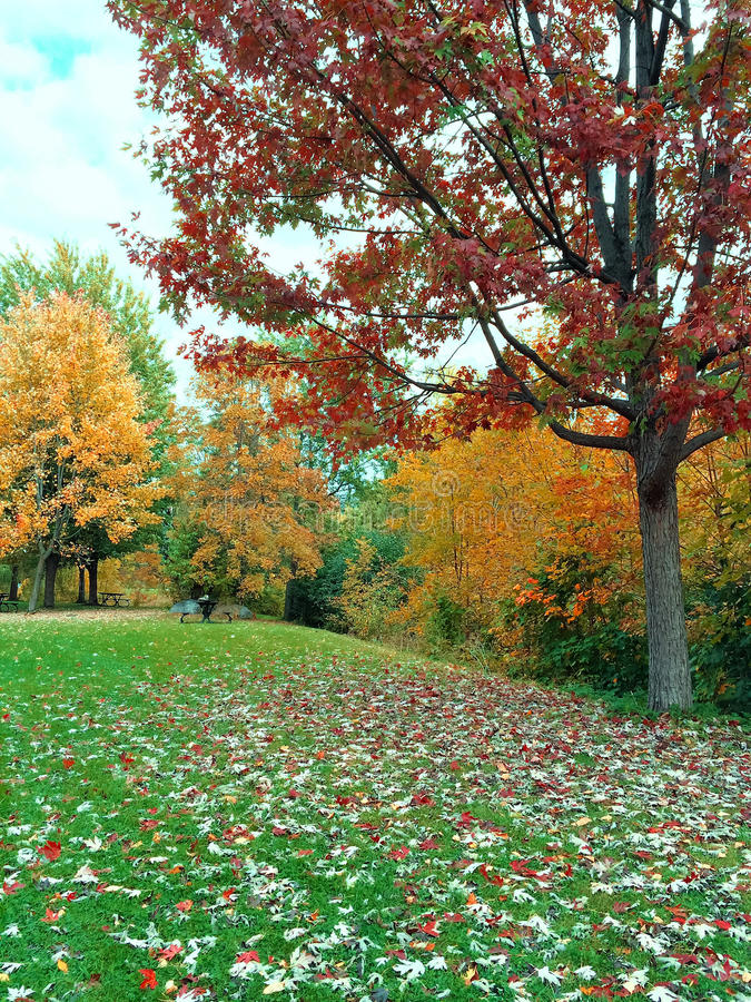 Autumn landscape with green lawn and colorful trees. Quebec, Canada royalty free stock photography
