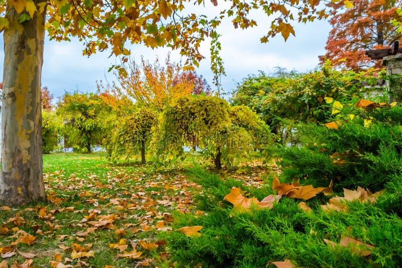 Autumn Landscape. In Herastrau Park, Bucharest, Romania stock photos