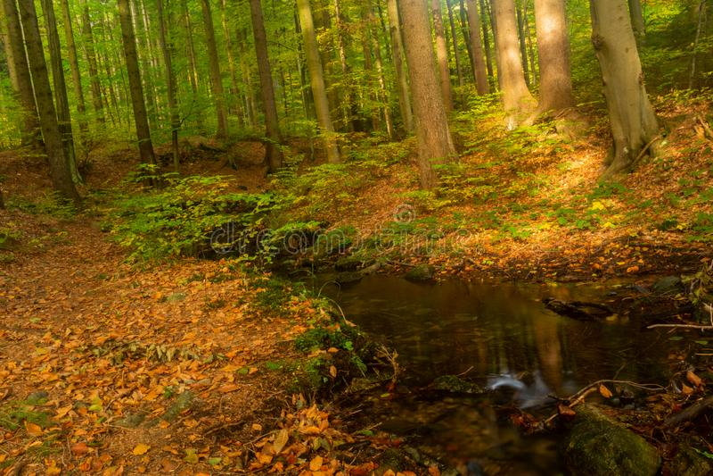 Autumn Landscape Herbstnaturansicht Bewölkte Landschaft des Herbstes der alten Herbsteiche nahe dem Teich im bewölkten Herbstwett stockbild