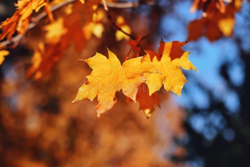 Autumn Landscape Herfstgebladertedaling en populierblad die in het onduidelijke beeld van de windmotie vliegen stock fotografie