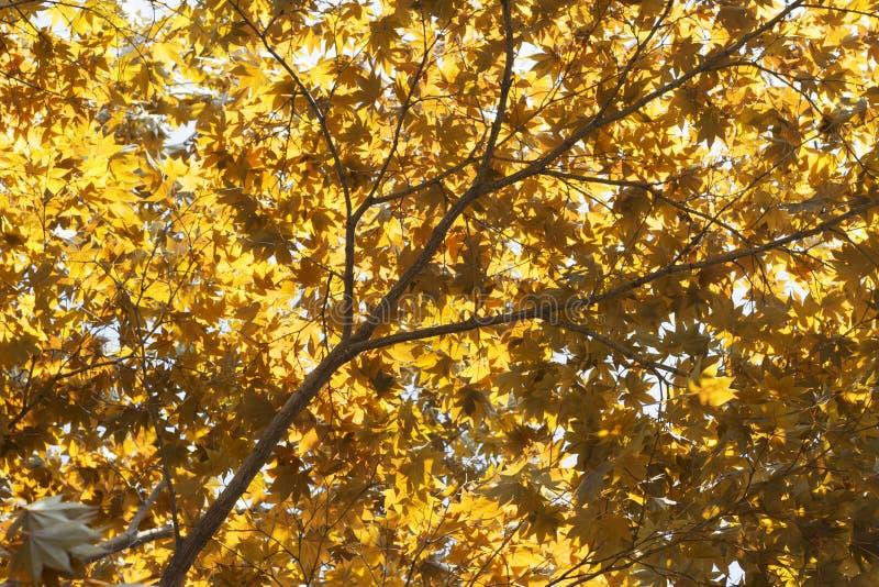 Autumn Landscape L'albero di autunno lascia il fondo del cielo, la struttura, fondo immagini stock libere da diritti