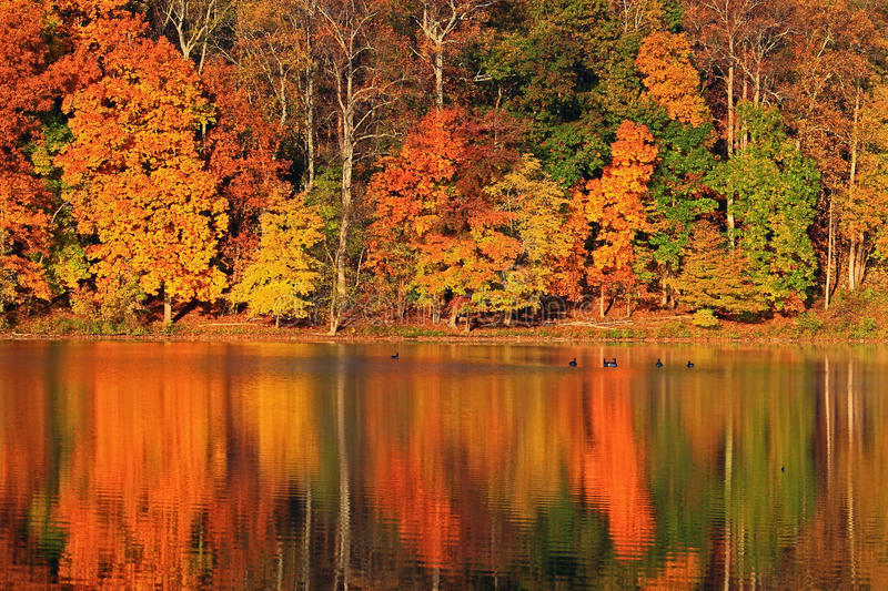 Autumn Landscape. Autumn Lake landscape with colorful reflection royalty free stock images