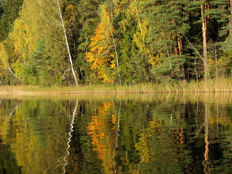 Autumn landscape with lake and gorgeous trees, beautiful reflections in calm water stock images