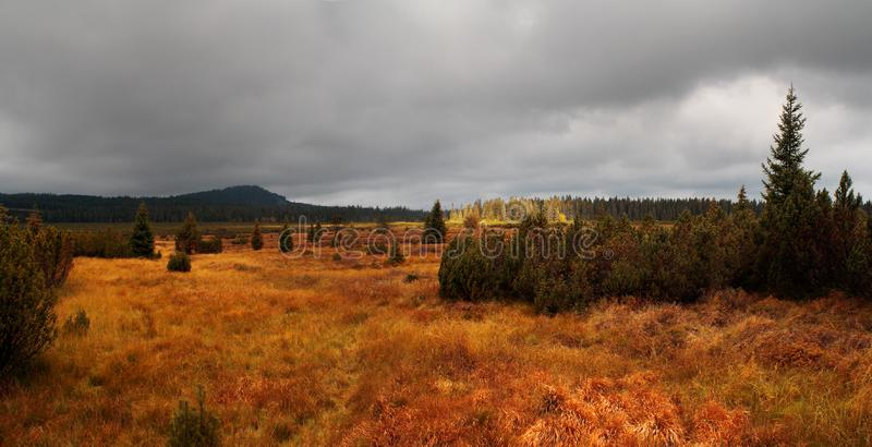 Autumn landscape with large grassy meadows and trees, overcast sky in the background, Lake moor stock images