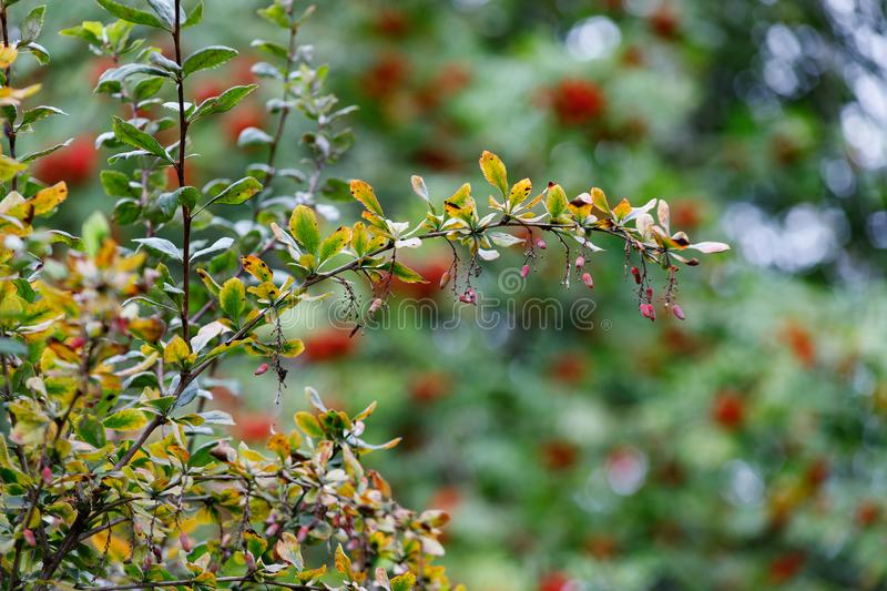 Autumn landscape. Autumn leaves of trees. Nature royalty free stock photo