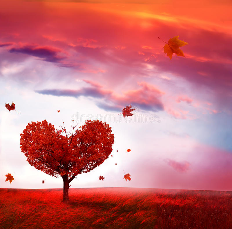 Autumn landscape with love tree stock image