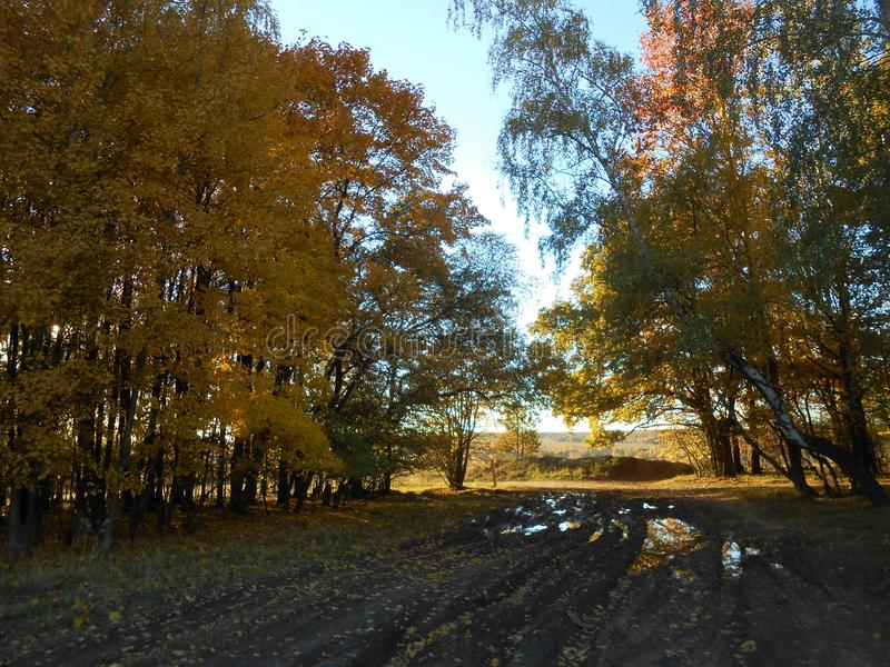 Autumn landscape on the marge of forest and field with rural road. royalty free stock images