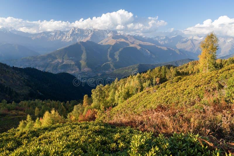 Autumn Landscape med björkskogen och bergskedja arkivbilder
