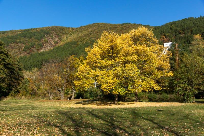 Autumn Landscape med det gula trädet region för stad nära Pancharevo för sjön, Sofia, Bulgarien royaltyfri foto