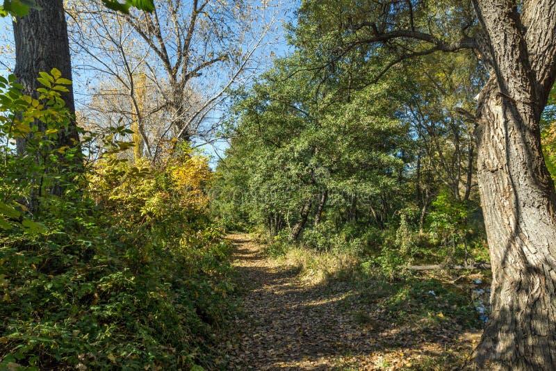 Autumn Landscape med det gula trädet region för stad nära Pancharevo för sjön, Sofia, Bulgarien arkivfoton