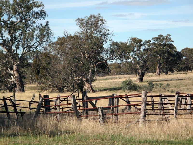 Autumn Landscape med staketet och träd royaltyfri bild