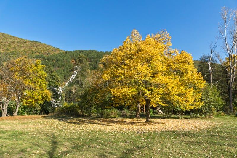 Autumn Landscape met gele boom dichtbij Pancharevo-meer, de stadsgebied van Sofia, Bulgarije royalty-vrije stock afbeelding