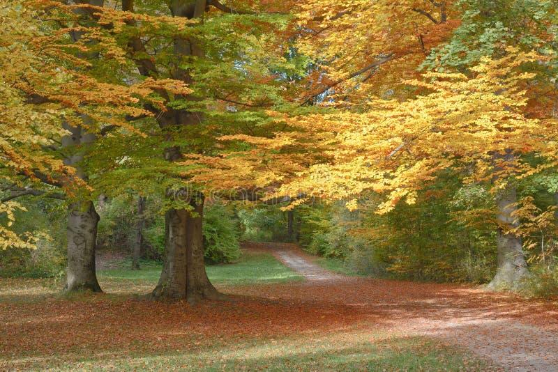 Autumn Landscape met Sleep royalty-vrije stock fotografie