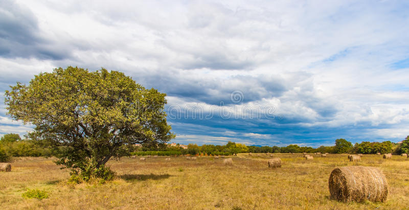 Autumn Landscape mit Heuschoberfeld und einzelnen Bäumen lizenzfreies stockfoto