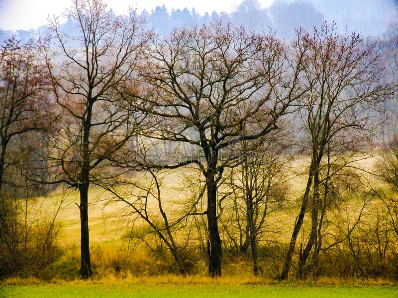 Autumn landscape in Moravian-Silesian Beskids in northern Czechia. Three trees in the foreground Autumn landscape in Moravian-Silesian Beskids in northern royalty free stock image