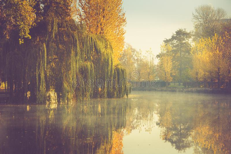 Autumn landscape in morning park. View of colorful trees and reflection in water. royalty free stock photo