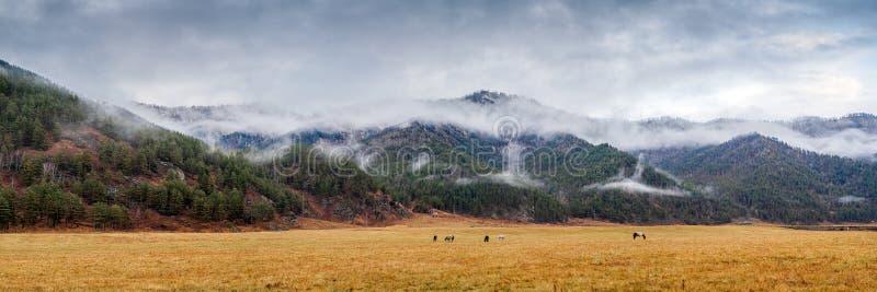 Autumn Landscape Mountain fotografia stock