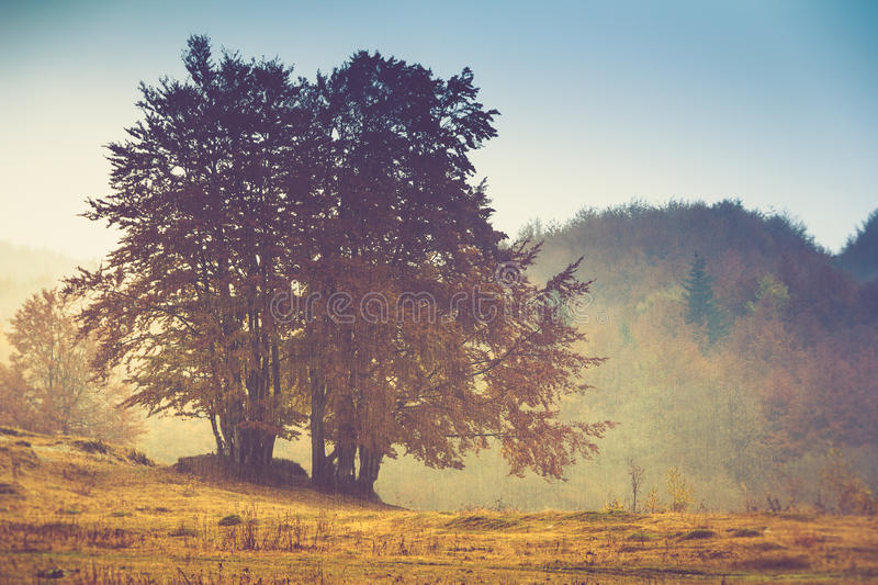 Autumn landscape in mountain. Colorful trees in fog and rain. Filtered image:cross processed vintage effect royalty free stock photography