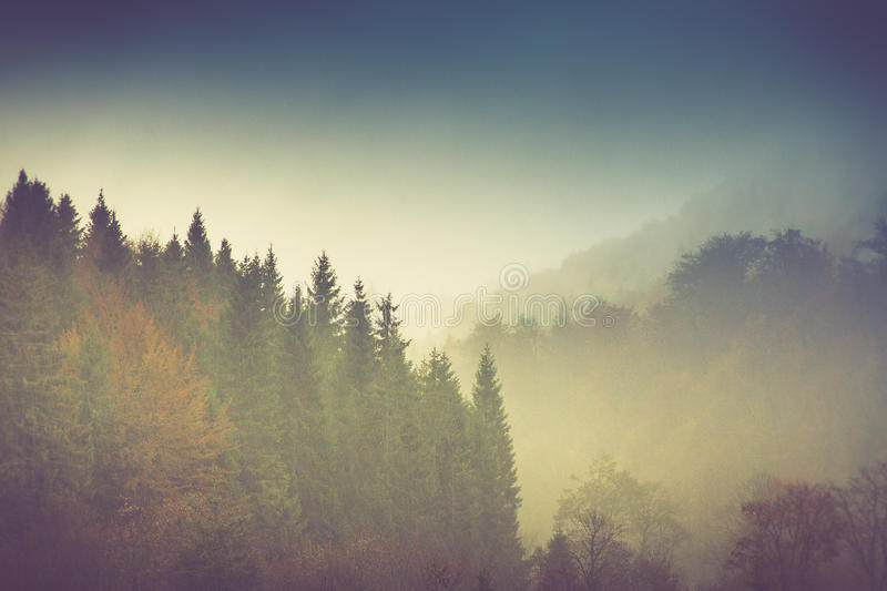 Autumn landscape in mountain. Colorful trees in fog and rain. Filtered image:cross processed vintage effect royalty free stock photo