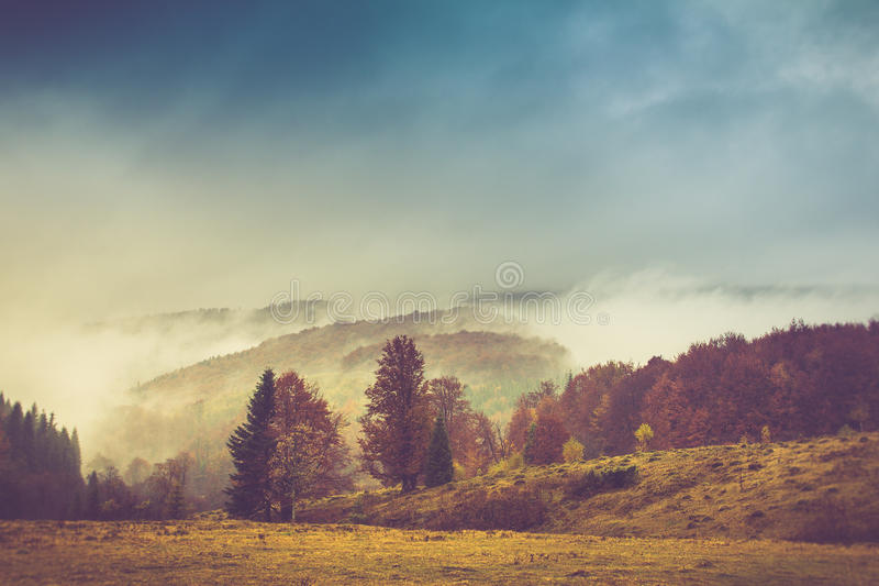Autumn landscape in mountain. Colorful trees in fog and rain. Filtered image:cross processed vintage effect stock image
