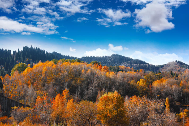 Download Autumn Landscape In The Mountains Stock Photo - Image of hill, floral: 33195562
